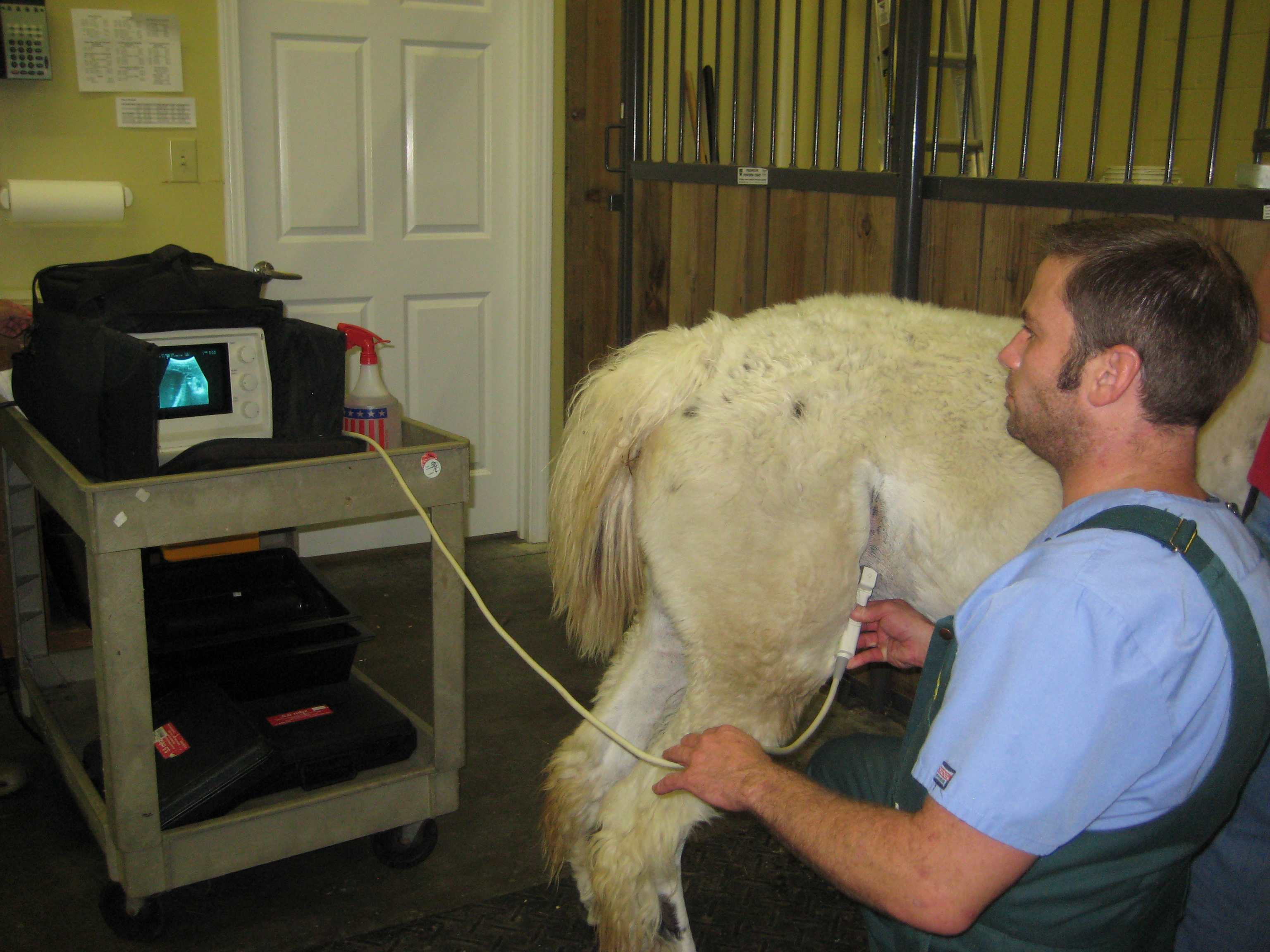 vip animal care creating personal relationships with